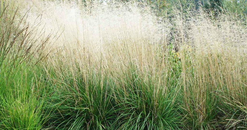 prydnadsgräs och ormbunkar